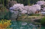 桜の里公園