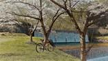 自転車春散歩