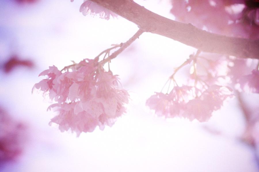 光あふれる春・・・
