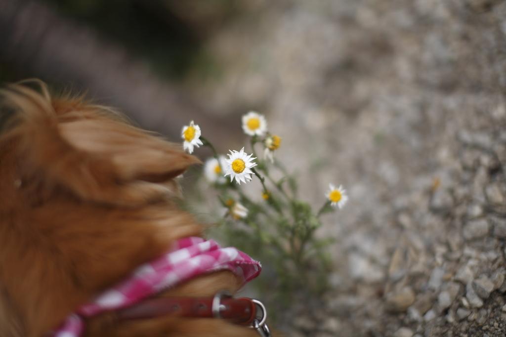 おいしいお花