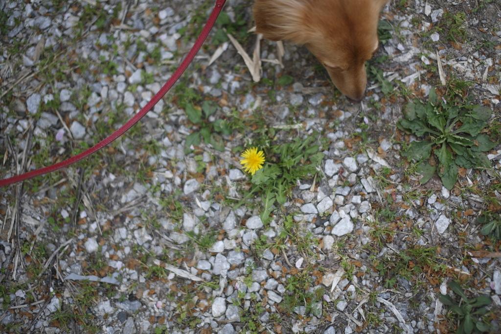 ナナと黄色い花