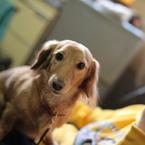 CANON Canon EOS 5Dで撮影した動物(ゆたんぽ。)の写真(画像)