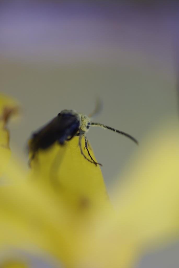 小っちゃい虫