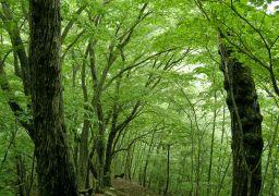 緑のトンネル_