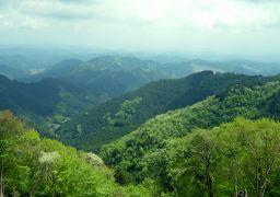 新緑の山_256