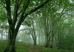 霧の山頂_256