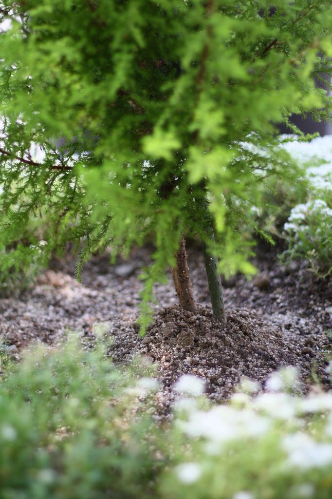 街路の鉢植え(下)