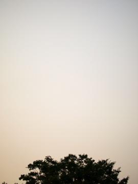 ある夕方-近所の公園にて