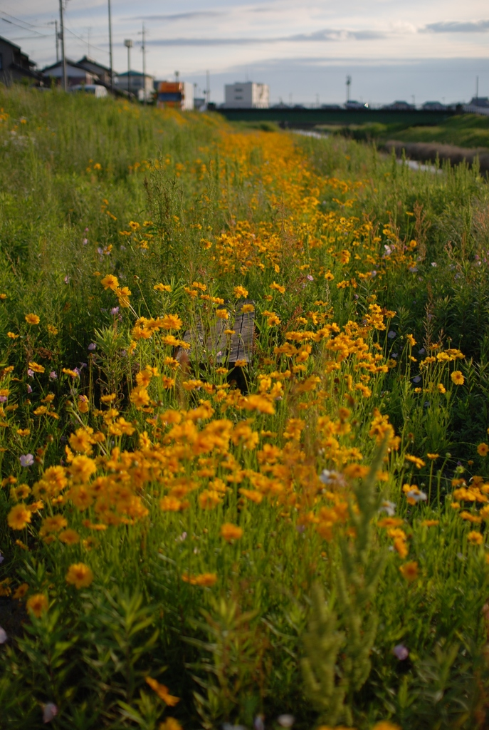 黄色い花と埋もれたベンチ