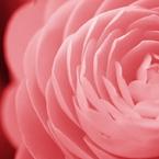 OLYMPUS E-P1で撮影した植物(茜色)の写真(画像)