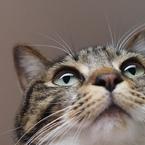 OLYMPUS E-M5で撮影した(好奇心)の写真(画像)