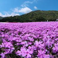 OLYMPUS E-P1で撮影した風景(休日)の写真(画像)