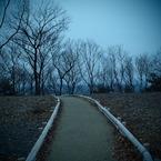 OLYMPUS E-P1で撮影した風景(冬の散歩道)の写真(画像)