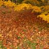 紅葉の森(2)