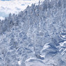 OLYMPUS E-3で撮影した(冬の北横岳にて(Scene20/40))の写真(画像)