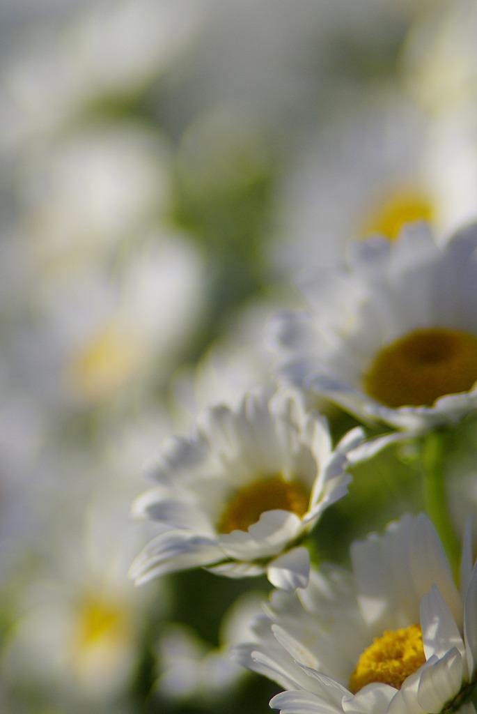 春うらら_IMG5406