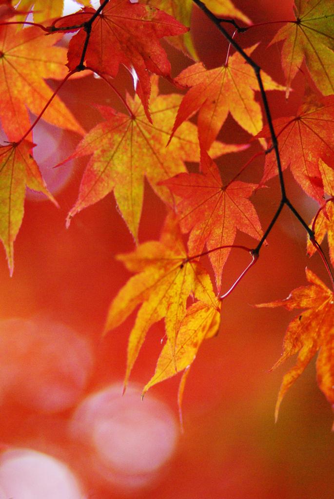 秋の彩り_IMGP1075