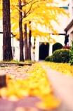秋ちゃんって素敵ですね~