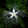 神秘的な花