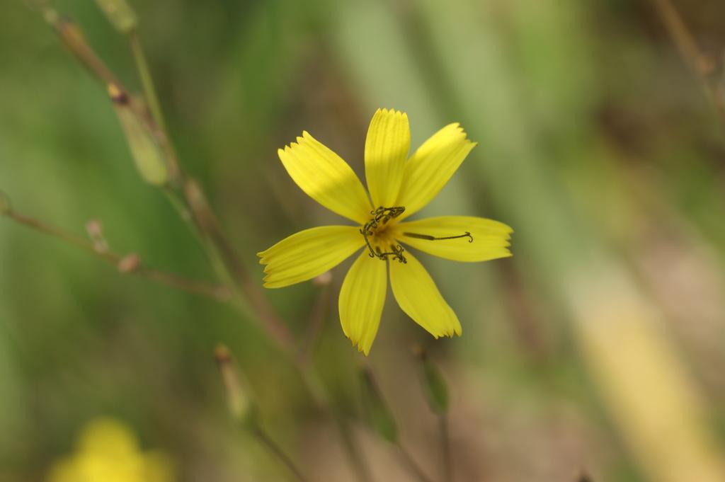黄色い小花