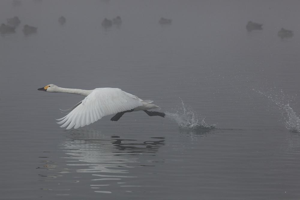 霧の海をあとにして