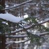 元旦 初雪