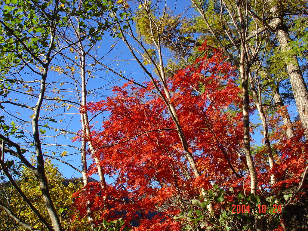 日光の紅葉DSC00032