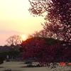 水戸偕楽園の梅祭りDSC00049