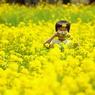 菜の花畑の少年