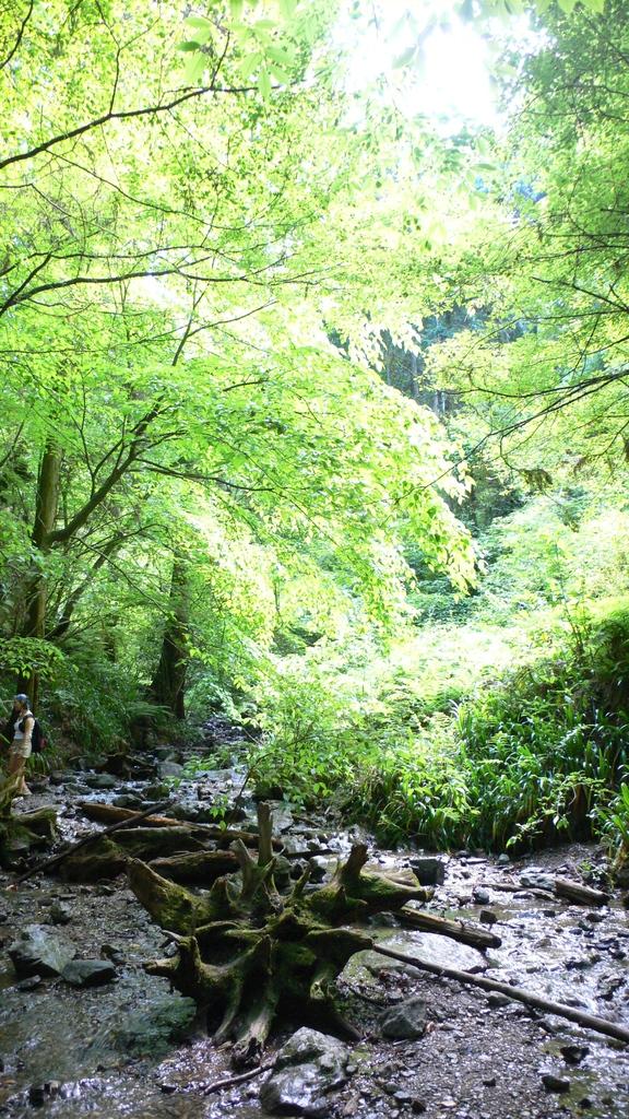 高尾山登山コース6号路(2)