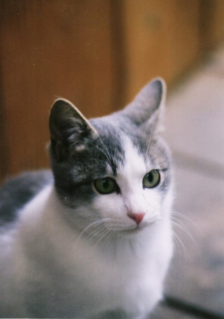 私、猫ですけど・・何か?