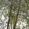 静寂の森・