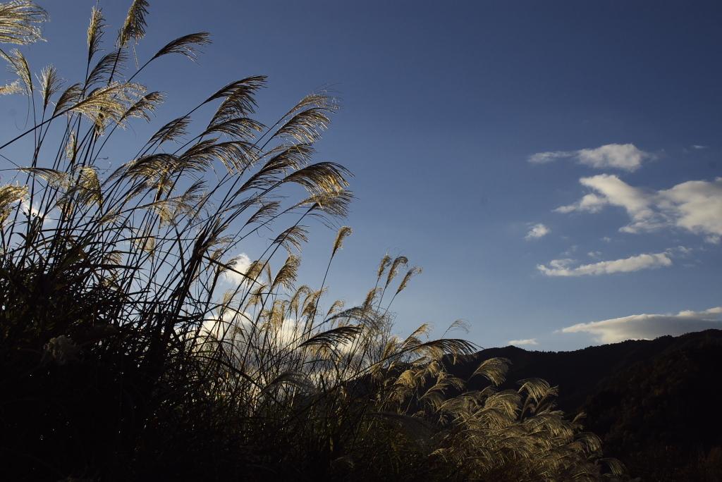 秋の空とススキ