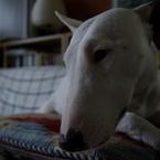 PENTAX PENTAX K10Dで撮影した動物(哀愁)の写真(画像)