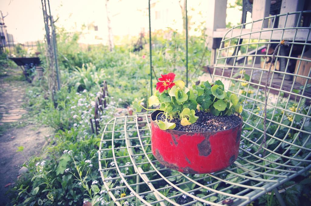 赤い花と赤い鉢