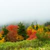 霧の錦秋Ⅱ
