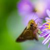 秋を告げる蝶