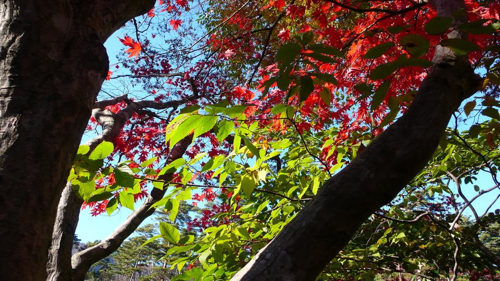 緑と紅の息吹