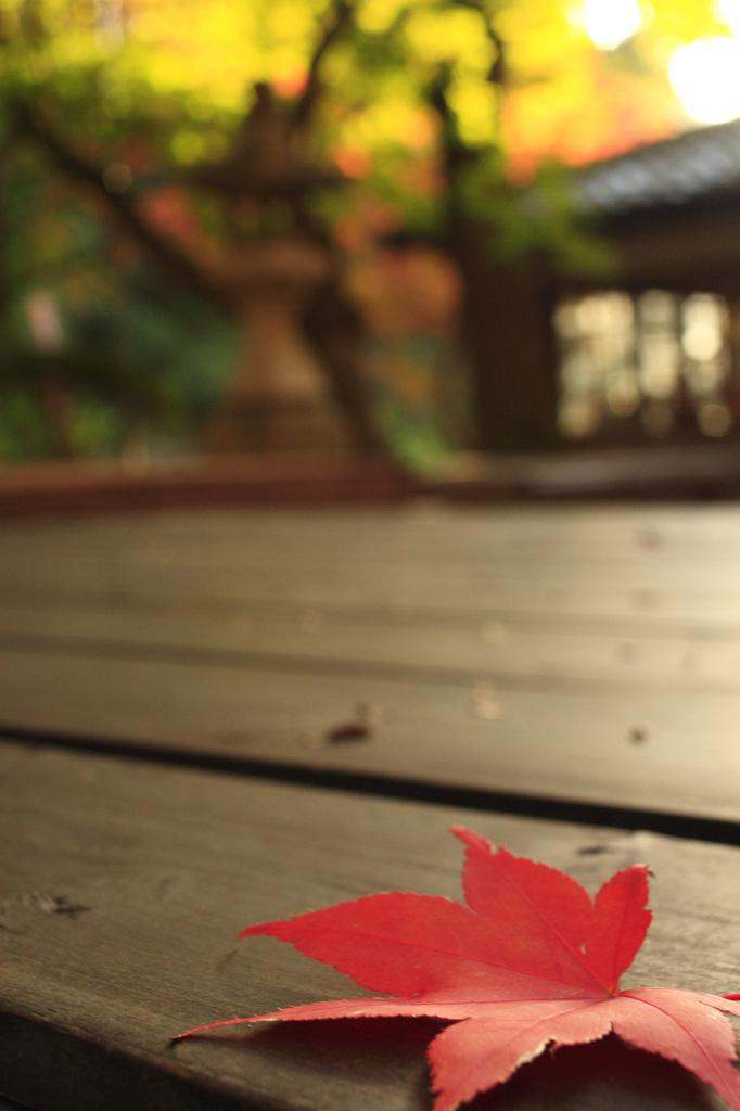 秋の落し物