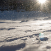 輝く雪の妖精たち