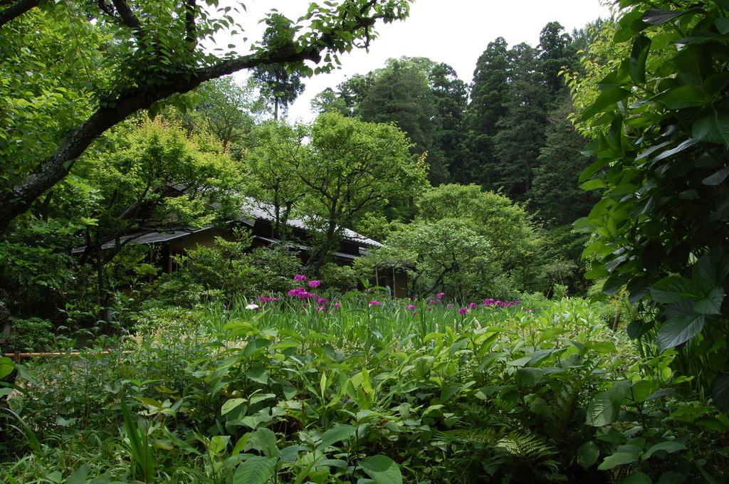鎌倉・東慶寺1