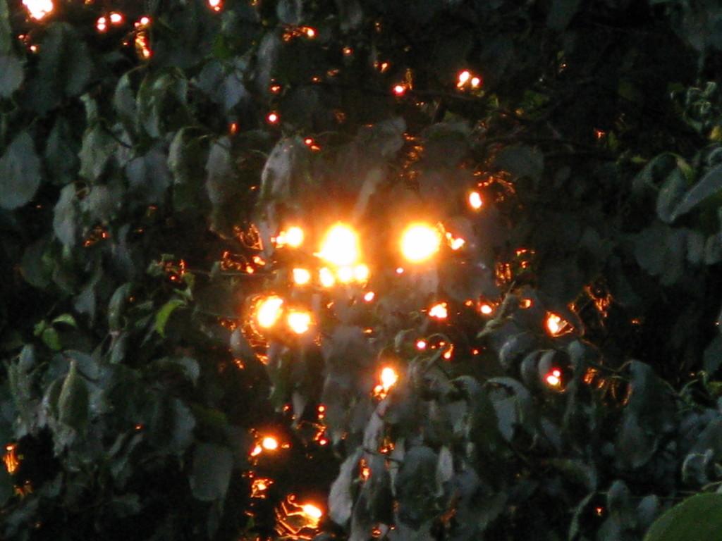 太陽の宝石