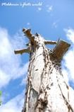 青い空と枯木