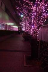 冬だけど桜並木