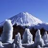 樹氷と富士山 (西湖野鳥の森公園)