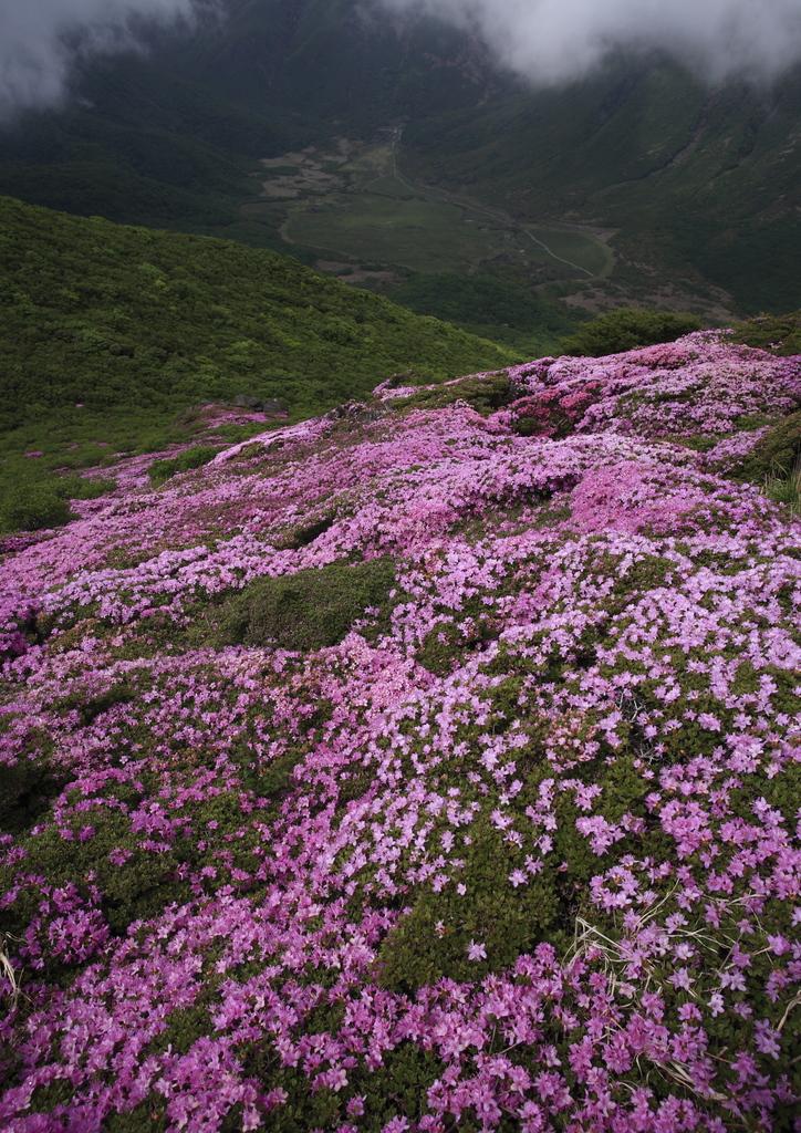 雲上のお花畑2