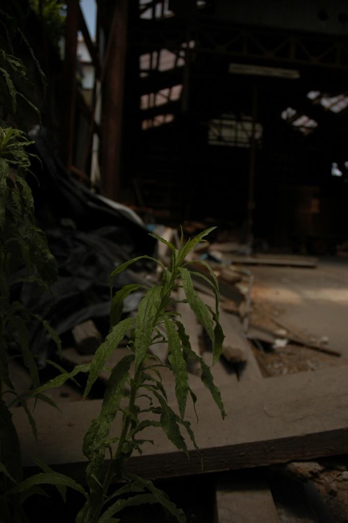 浸食する雑草