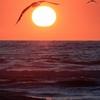 落陽に翔る