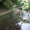 柿田川湧水池で遊ぶ子供たち