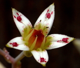 不思議な花模様